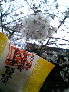 花より・・・☆かずみ☆