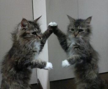 鏡〜さとうゆう〜